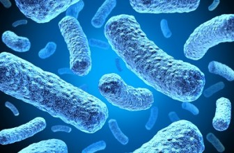How and When to take Probiotics?